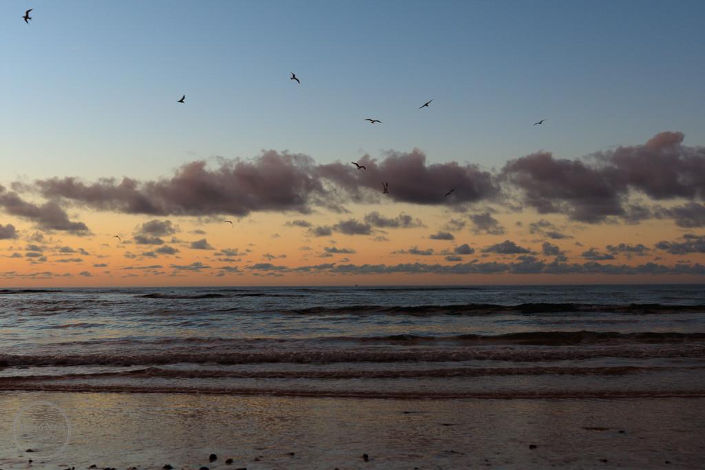 #MarcoNavaFotografo#Fuerteventura5